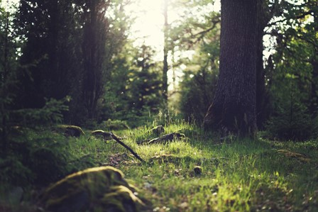 forest_1