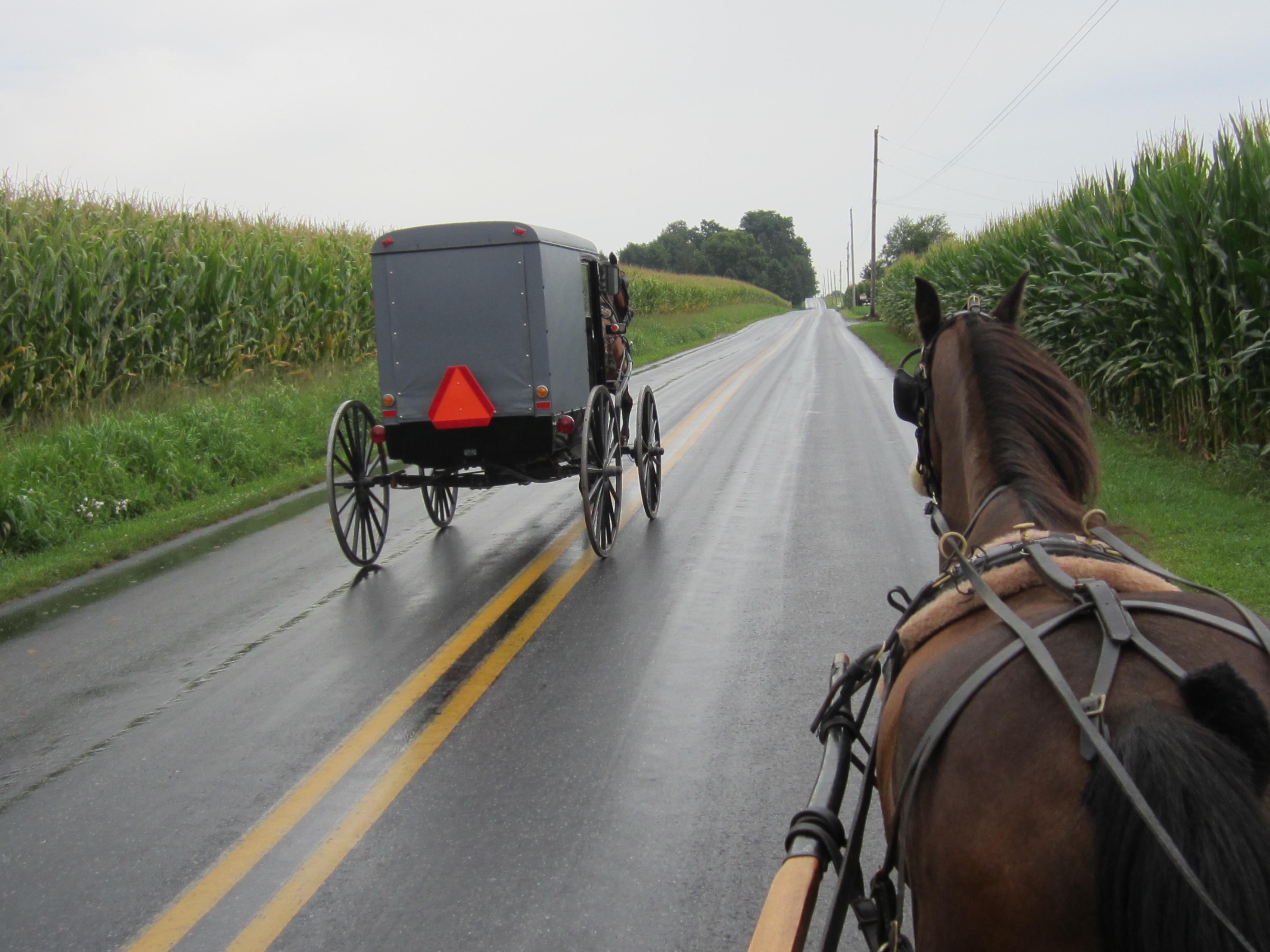Amish_Horse_Susan_Meissner