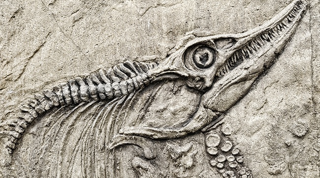 Dinosaurs_and_the_Bible_-_cropped_image